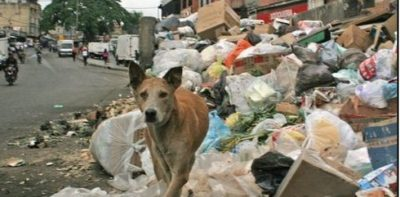 People hunt and kill dogs and pigeons in Caracas for food.